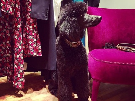 "our dear guest today  lovely  "" SAMU "" @sagmeister_women @ysl @celine.world #doglove #doglovers #…"