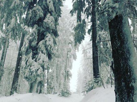 So muss Winter️️ #winterwonderland #bregenz #visitvorarlberg #visitbregenz #dornbirn #feldkir…